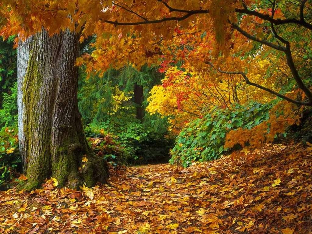 Hutan gugur (decidous forest)
