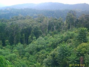 Hutan hujan tropis dilihat dari atas tak lebat dan gelap