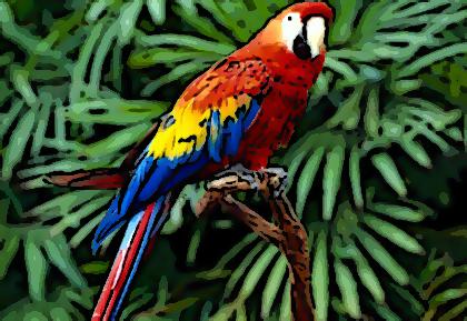 84 Contoh Gambar Hewan Burung Terbaik