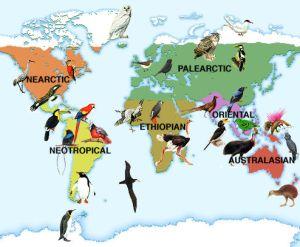 52 Gambar Peta Persebaran Fauna Oriental Paling Hist