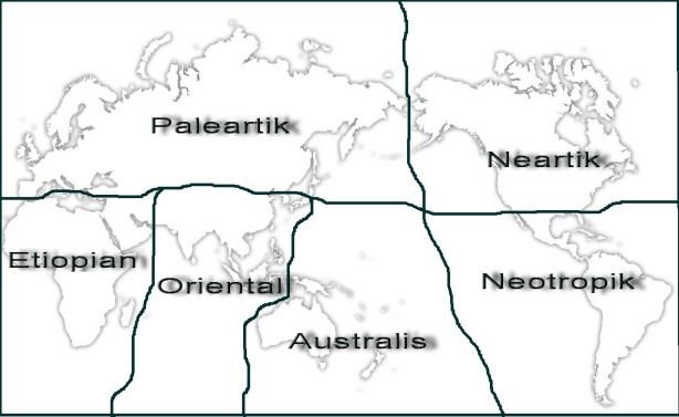 PERSEBARAN HEWAN DI DUNIA | geographyeducation